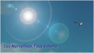 2011-fous-volants-vign