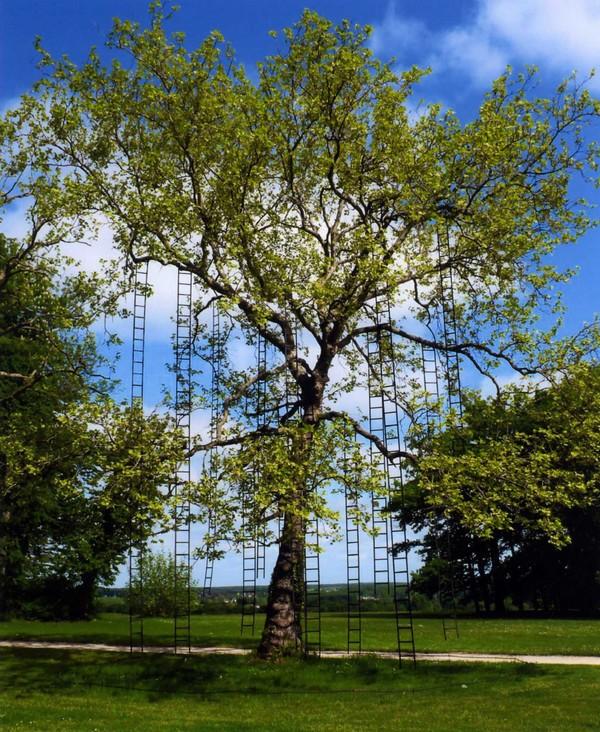 f-mechain-arbre-aux-echelles